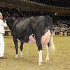 Royal16_Holstein_1M9A1169