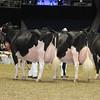 Royal16_Holstein_L32A4802