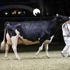 Royal16_Holstein_1M9A1607
