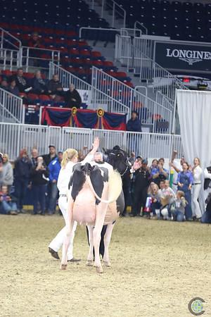 Royal16_Holstein_L32A5003
