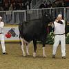 Royal16_Holstein_1M9A1298