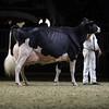 Royal16_Holstein_1M9A1559