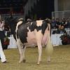 Royal16_Holstein_1M9A1764