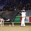 Royal16_Holstein_L32A4944