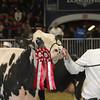 Royal16_Holstein_1M9A1226