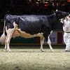 Royal16_Holstein_1M9A1589