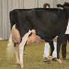 Royal16_Holstein_1M9A1441