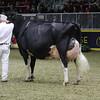 Royal16_Holstein_1M9A1711
