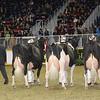 Royal16_Holstein_1M9A1308
