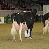 Royal16_Holstein_1M9A1363