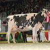 Royal16_Holstein_L32A4763