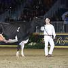 Royal16_Holstein_L32A4930