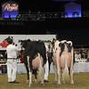 Royal16_Holstein_1M9A1445