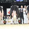 Royal16_Holstein_L32A5013