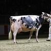 Royal16_Holstein_1M9A1491