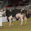 Royal16_Holstein_1M9A1412