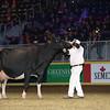 Royal16_Holstein_L32A4943