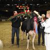 Royal16_Holstein_1M9A1834