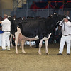 Royal16_Holstein_L32A4958