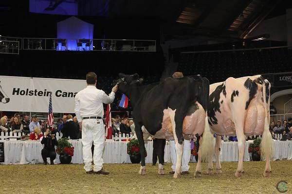 Royal16_Holstein_1M9A1448