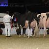 Royal16_Holstein_1M9A1449