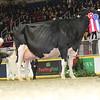Royal16_Holstein_L32A4845