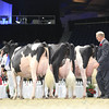 Royal16_Holstein_L32A5016