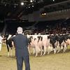 Royal16_Holstein_1M9A1190