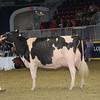 Royal16_Holstein_1M9A1734