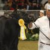 Royal16_Holstein_1M9A1231