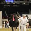 Royal16_Holstein_1M9A1313