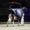 Royal16_Holstein_1M9A1522