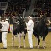 Royal16_Holstein_1M9A1259