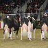 Royal16_Holstein_1M9A1309