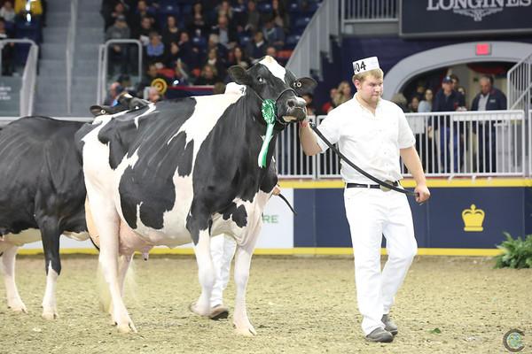 Royal16_Holstein_L32A4849