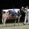 Royal16_Holstein_1M9A1489
