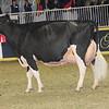 Royal16_Holstein_1M9A1352