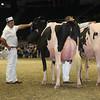 Royal16_Holstein_L32A4963