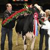 Royal16_Holstein_1M9A1837