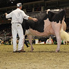 Royal16_Holstein_1M9A1177