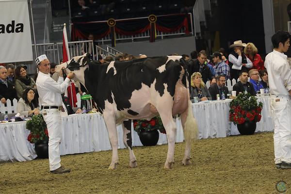 Royal16_Holstein_1M9A1417