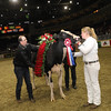 Royal16_Holstein_1M9A1839