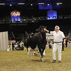 Royal16_Holstein_1M9A1316