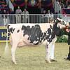 Royal16_Holstein_L32A4914