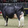 Royal16_Holstein_1M9A1713
