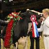Royal16_Holstein_1M9A1843