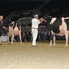 Royal16_Holstein_1M9A1693