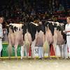 Royal16_Holstein_L32A4882