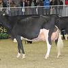 Royal16_Holstein_1M9A1331