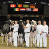 Royal16_Holstein_L32A4893